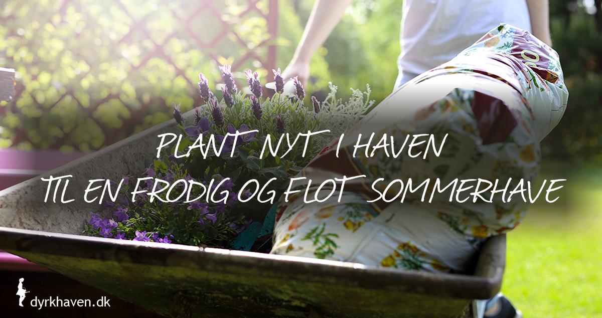 Plant nyt i haven om foråret, så du kan nyde en flot, frodig og smuk sommerhave - Klub Dyrkhaven gør det nemt at dyrke din have
