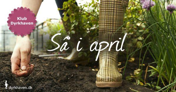 Her får du listen over de frø til grøntsager, krydderurter og blomster, som du kan så indenfor eller udenfor i april - Klub Dyrkhaven gør det nemt at dyrke have