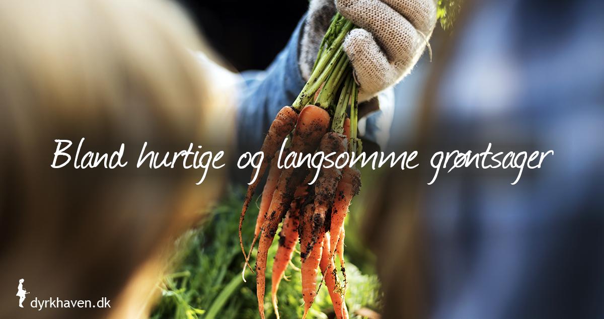 Få flere grøntsager ved at så hurtigtvoksende grøntsager mellem de langsomtvoksende - Klub Dyrkhaven gør det nemmere at dyrke din have
