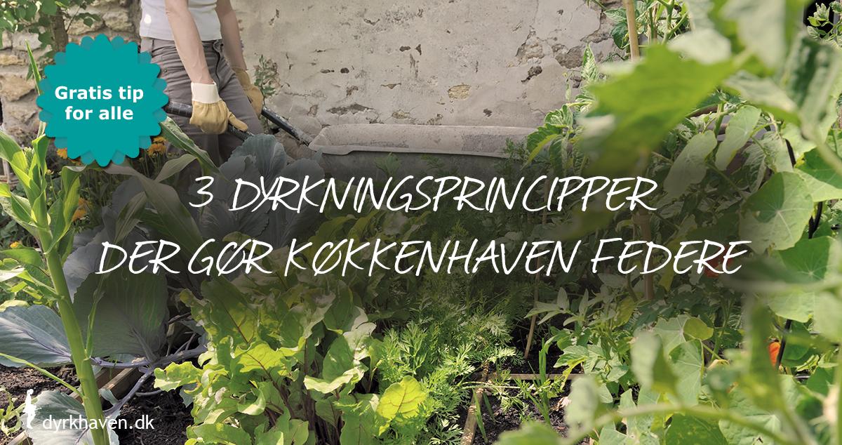 Få inspiration til tre dyrkningsprincipper, som vil give dig en federe køkkenhave - Klub Dyrkhaven gør det nemmere at dyrke din have