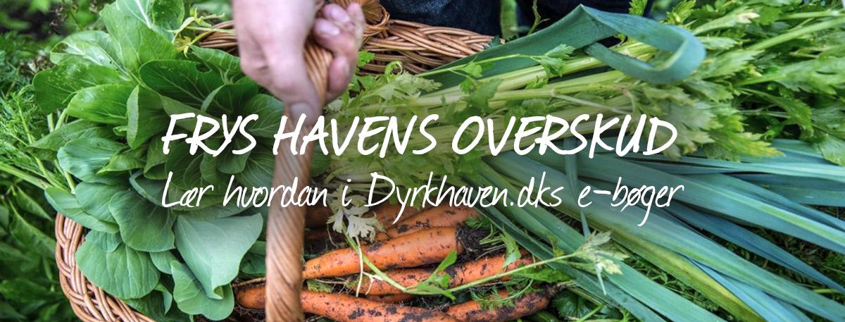 Frys sommerens overskud af grøntsager og få glæde af dem hele vinteren - Dyrkhaven.dk
