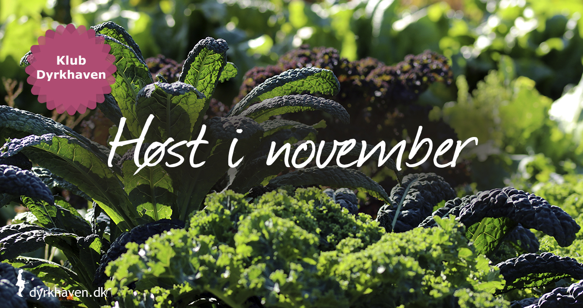 Der er faktisk en del at høste i novemberhaven. Se hvad du kan høste i november - Dyrkhaven.dk gør det nemmere at dyrke din have
