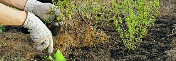 Plant frugtræer, bærbuske, hæk og roser i november - Dyrkhaven.dk gør det nemmere at dyrke have