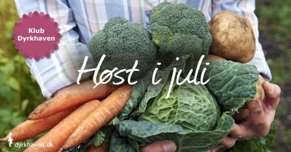 I løbet af juli begynder vi for alvor at kunne høste mulige lækre grøntsager og bær i køkkenhaven - Klub Dyrkhaven gør det nemt at dyrke have