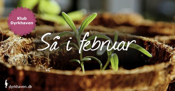 Sidst i februar kan du begynde at så de første frø både ude og inde. Se hvilke frø du kan så i februar - Klub Dyrkhaven gør det nemt at dyrke din have