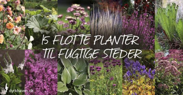 15 flotte blomster og planter til fugtige eller våde steder i haven - Dyrkhaven.dk gør det nemt at dyrke have