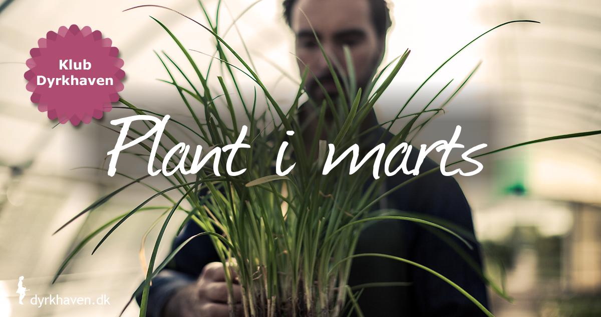 Er marts måned mild og forårsagtig kan du plante både buske og træer, stauder og roser. marts er en god plantemåned - Klub Dyrkhaven før det nemt at dyrke have