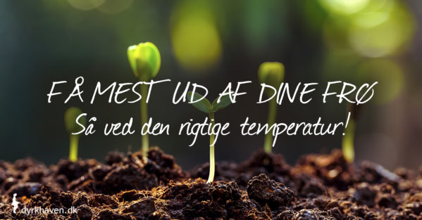 Så ved den rigtige temperatur, så spirer flest af frøene til planter. Se tabel med spiretemperatur her - Dyrkhaven.dk gør det nemt at dyrke have