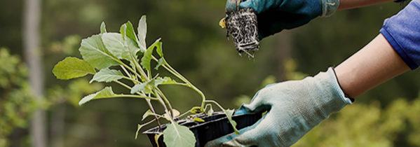 I juni kan du plante forspirede planter som kål og salat, men du kan også plante blomster, buske og træer, hvis du vander - Dyrkhaven.dk gør det nemt at dyrke din have