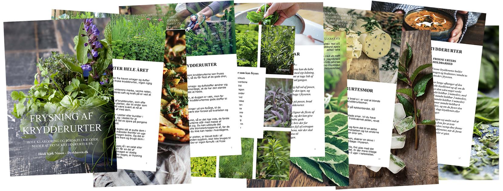 Gem krydderurter i fryseren. Frosne krydderurter bevarer smagen rigtig godt - Dyrkhaven.dk gør det nemt at dyrke din have