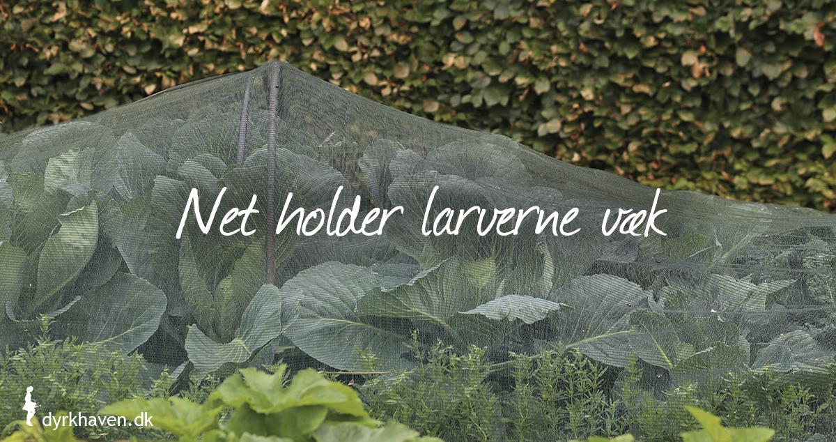 Net er det mest effektive til at holde kållarver - kålorme væk - Dyrkhaven.dk gør det nemt at dyrke have