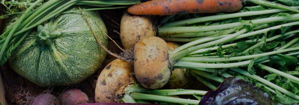 September er den store høstmåned. Her kan du høste grøntsager, bær og frugter fra køkkenhaven og gemme til vinteren - Dyrkhaven.dk gør det nemt at dyrke din have
