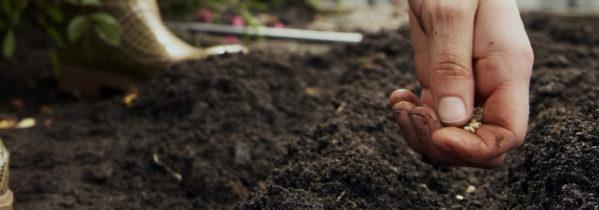 I september kan du så frø, der kan overvintre og give en tidlig høst til foråret - Dyrkhaven.dk gør det nemt at dyrke din have
