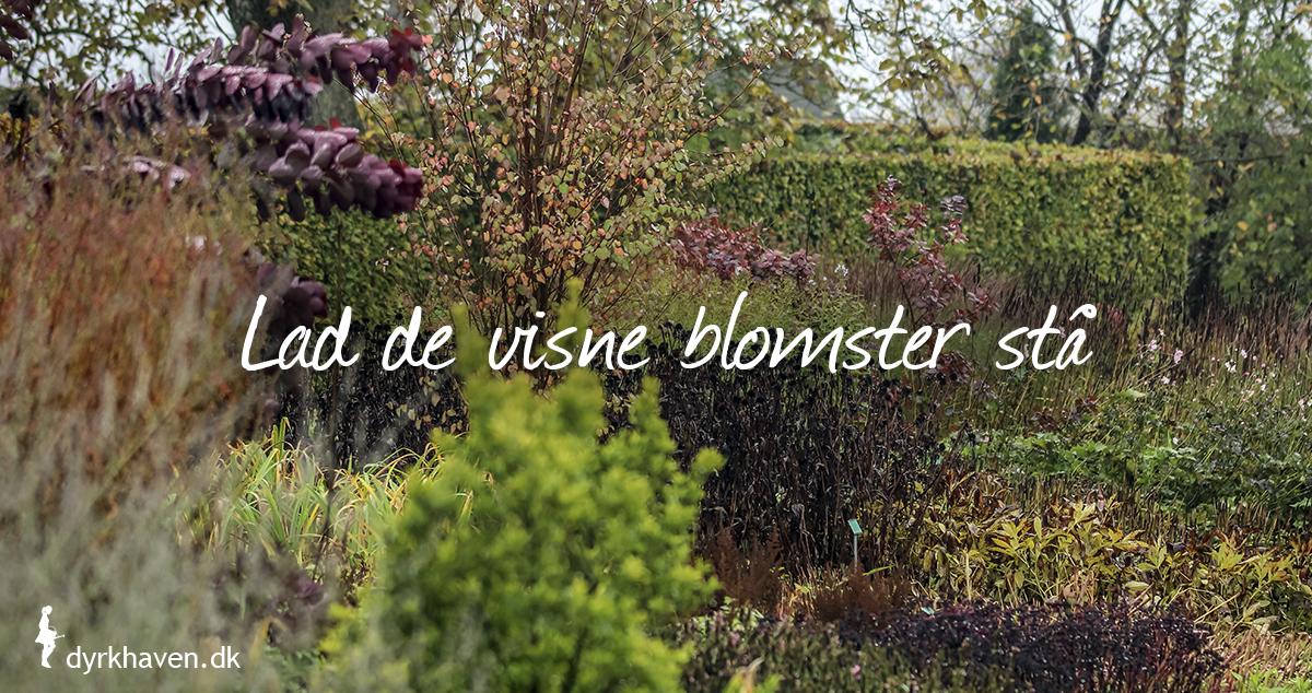 Lad de visne blomster stå i staudebedet. De giver vinterly for insekter, mad til fugle og beskytter jorden og forårets planter - Dyrkhaven.dk gør det nemt at dyrke din have