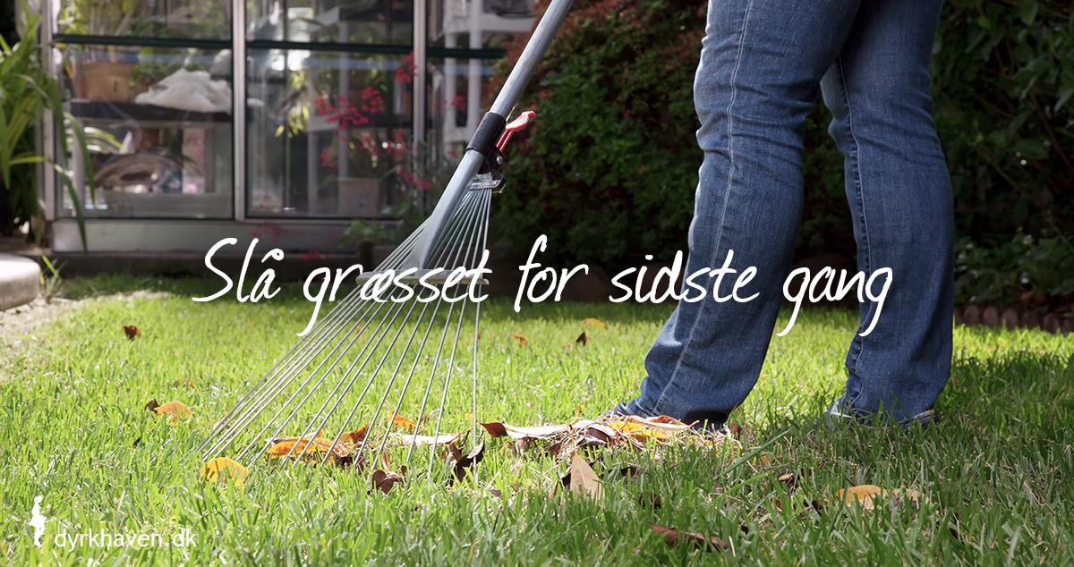 Riv blade sammen og slå græsplænen for sidste gang i oktober - Dyrkhaven.dk gør det nemt at dyrke din have