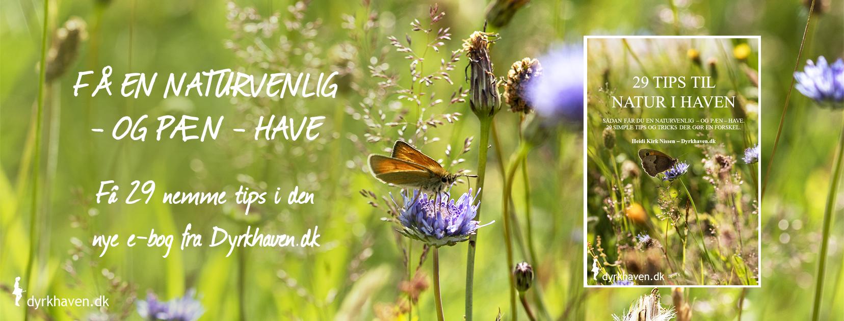 Få 29 tips og tricks til at få mere natur i haven. Få en naturvenlig - og pæn - have med e-bogen - Dyrkhaven.dk gør det nemmere at dyrke have
