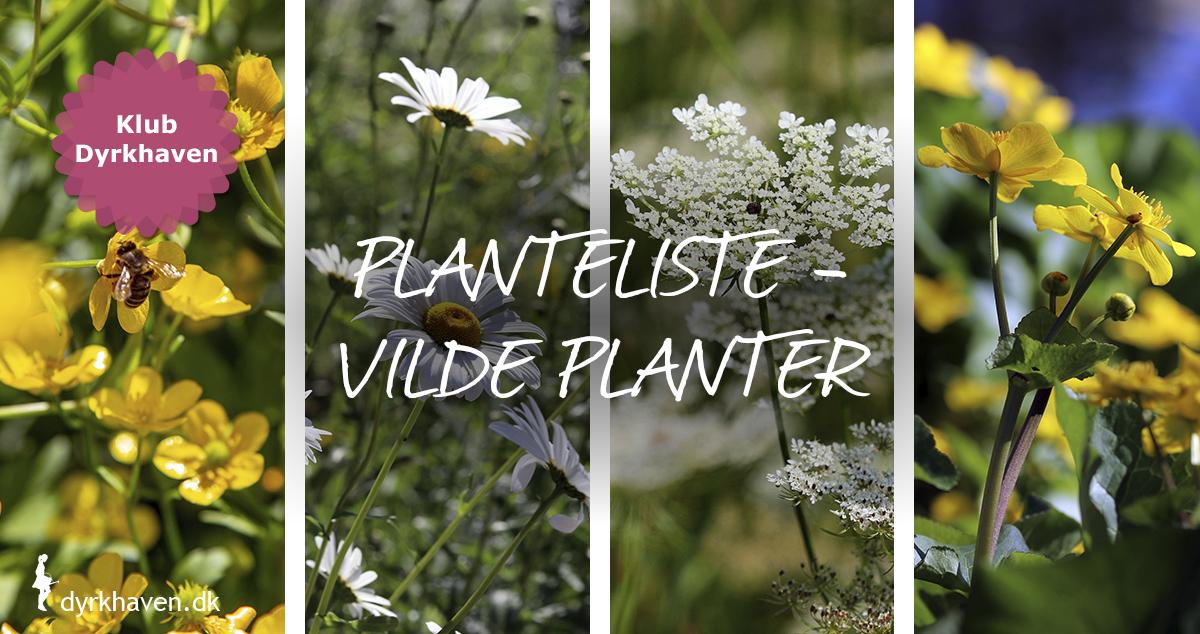 Dyrk vilde planter og blomster i den naturvenlige have - Dyrkhaven.dk
