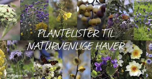 Få hundredevis af forslag til planter til naturvenlige haver i listerne fra Dyrkhaven.dk