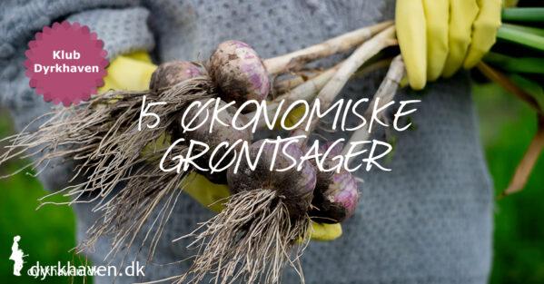 15 grøntsager det kan betale sig økonomisk at dyrke selv - Klub Dyrkhaven