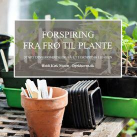 E-bog: Forspiring for begyndere - Start dine frø indenfor og få et forspring i haven - Dyrkhaven.dk