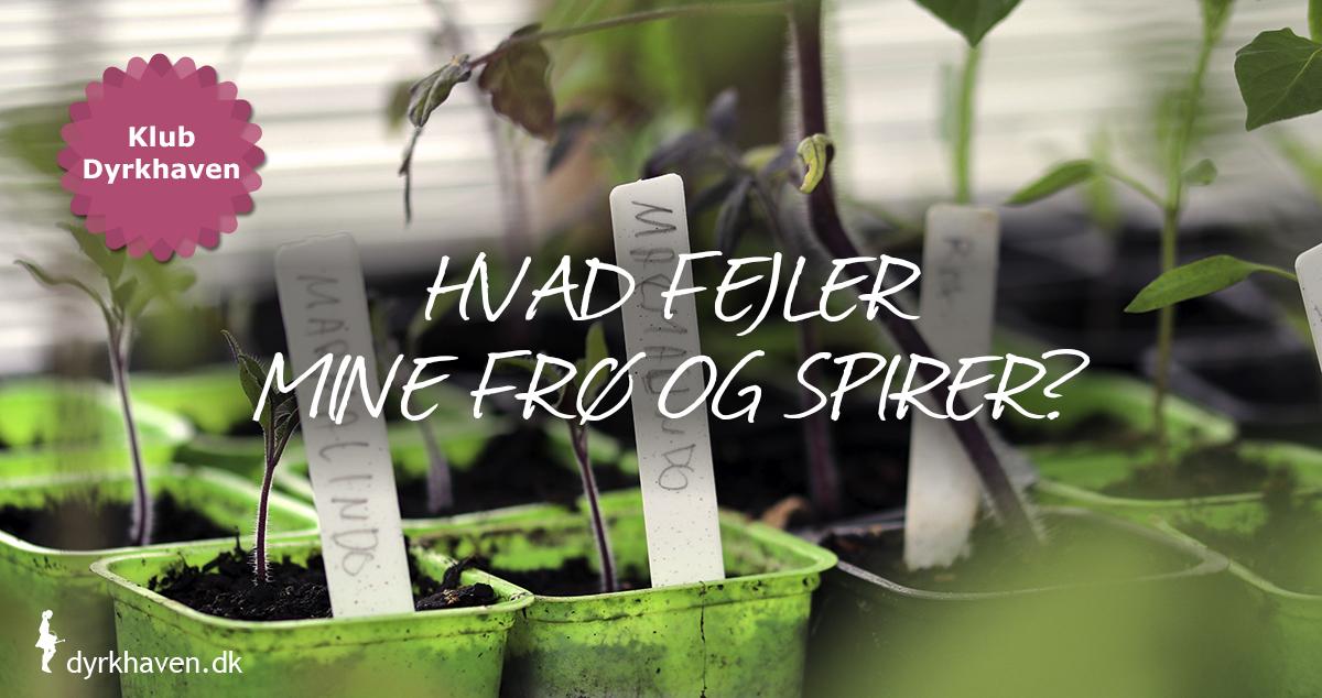 Hvad fejler mine frø og spirer, når de ikke vil gro eller dør? Find svaret i Klub Dyrkhavens artikel