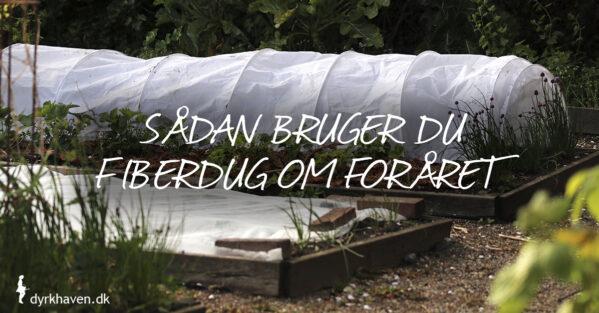 Brug fiberdug om foråret og beskyt planter mod kulde, blæst, sol og skadedyr - Dyrkhaven.dk