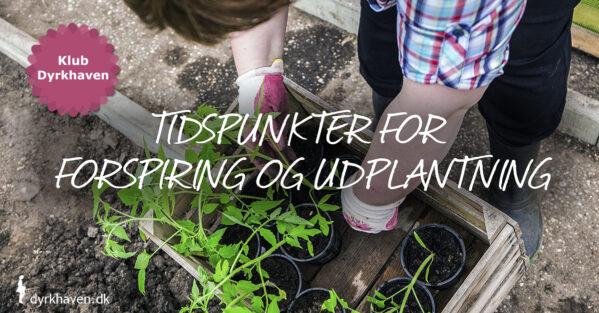 Timing er vigtig, når du forspirer frø og planter de forspirede planter ud i haven. Se hvornår du gør begge dele bedst - Dyrkhaven.dk