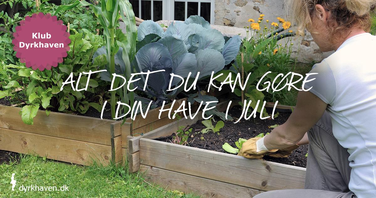 Alt det du kan gøre i din have i juli måned - Klub Dyrkhaven gør det ekstra nemt at dyrke din have