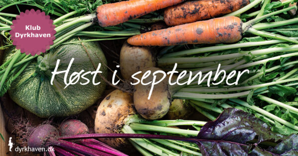September er et høstorgiet i hjemmedyrket frugt og grønt. Det er den sidste høstmåned for mange grøntsager i køkkenhaven, så det er bare om at høste løs - Klub Dyrkhaven